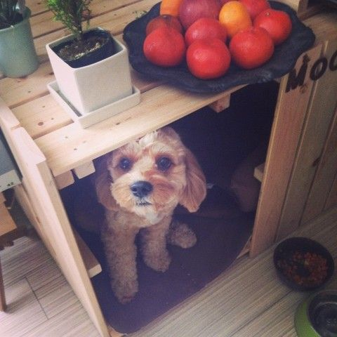 話題のdiyに挑戦 100均 すのこ を使ってインテリア家具を作っちゃおう 犬のケージアイデア 犬小屋 Diy 犬 ハウス