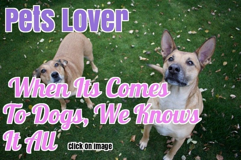 You And Your Dog Tips For A Great Relationship Dogs Pet Dogs