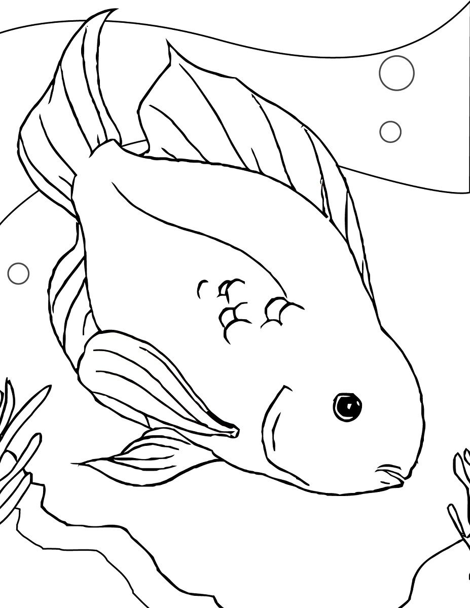 fish color page parrot fish