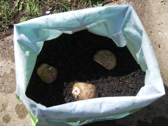 Diy Potato Grow Bag Gardening Growing Sweet Potatoes 400 x 300