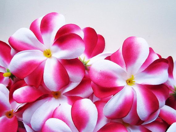 24 Red And White Plumeria Frangipani Heads Artificial Silk Etsy Artificial Silk Flowers Floral Supplies Wholesale Silk Flowers