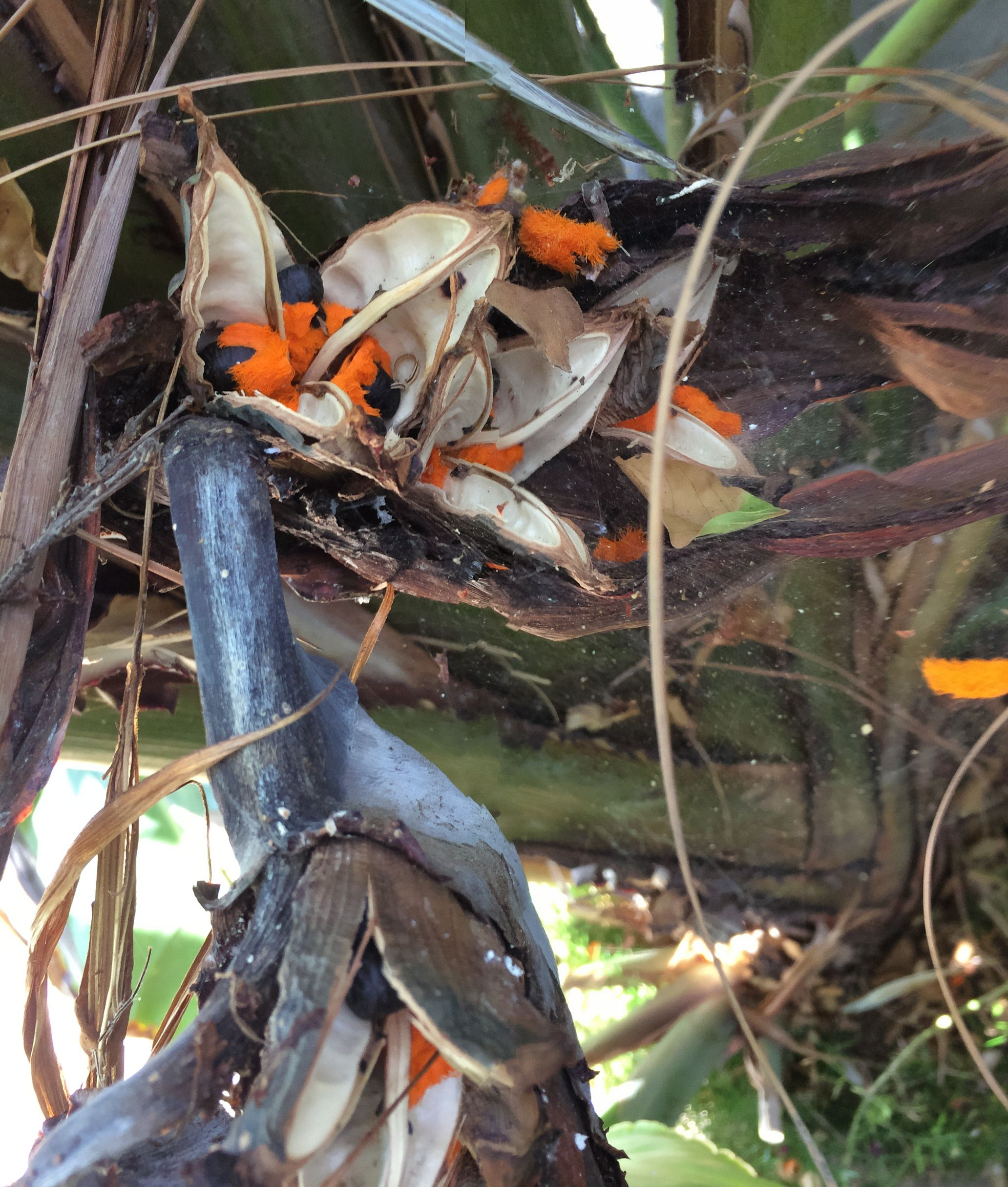 Park Art|My WordPress Blog_Red Birds In A Tree Propagation