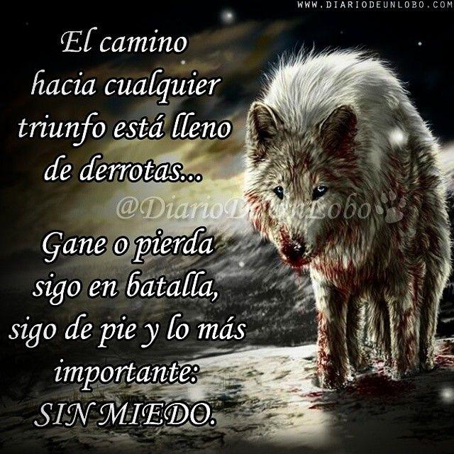Valiente Guerrero Lobos Pinterest Wolf Frases Y Quotes