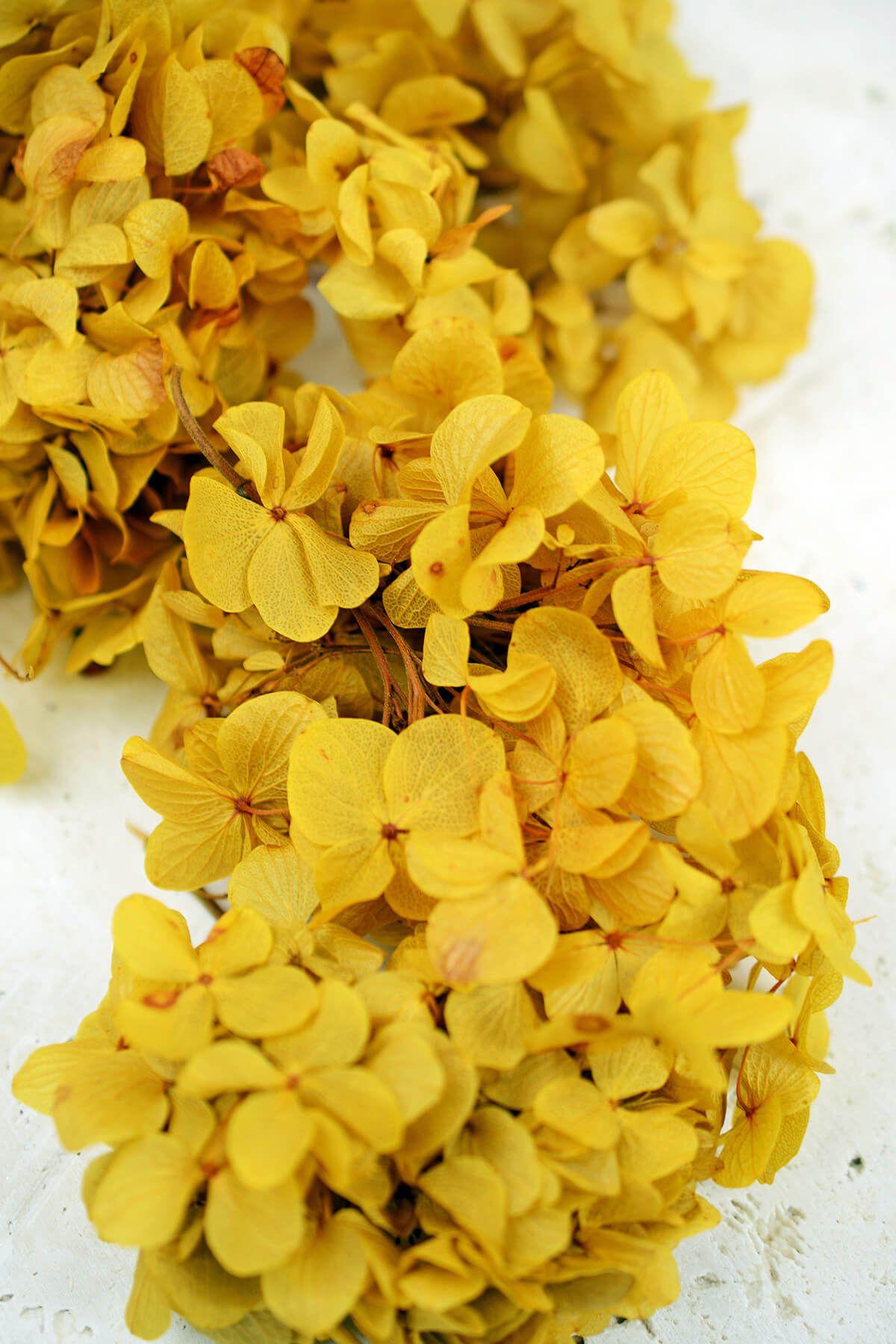 Preserved mango yellow hydrangea flowers hydrangea hydrangea preserved mango yellow hydrangea flowers mightylinksfo