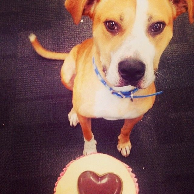Just Registered For The Rspca Cupcake Day D Do Good Cupcake Day Cupcakes Y Baking