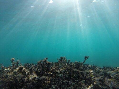 Unterwasser/Kroatien