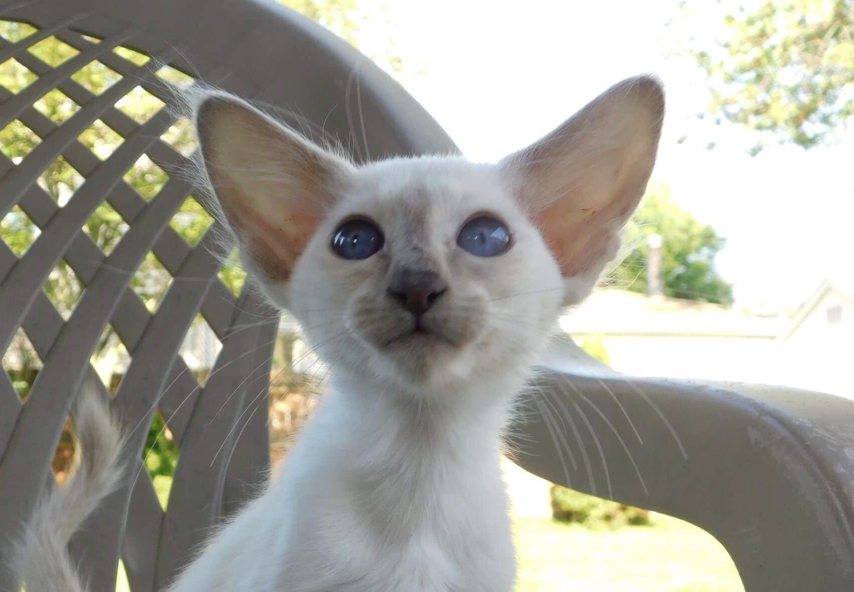 Park Art|My WordPress Blog_Hairless Kittens For Sale California