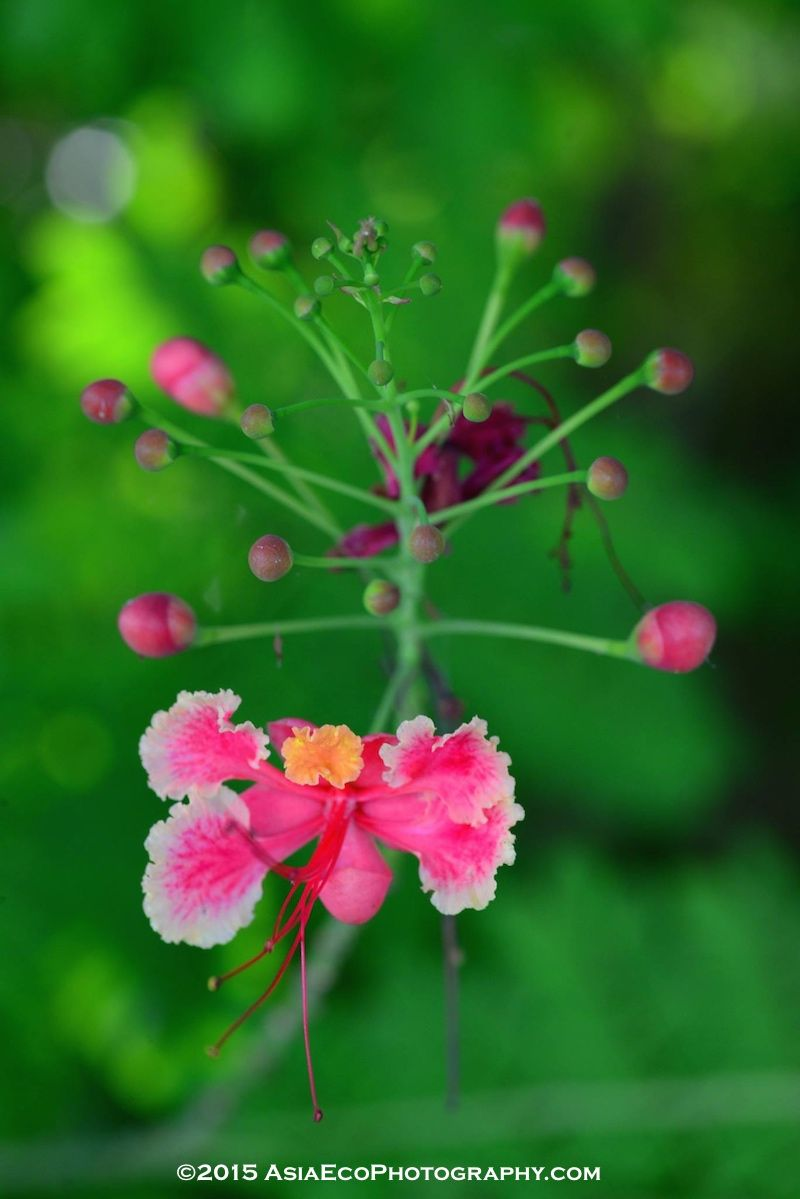 Petite Pink Flowers Found In Thailand During Our Flower Photo Tour