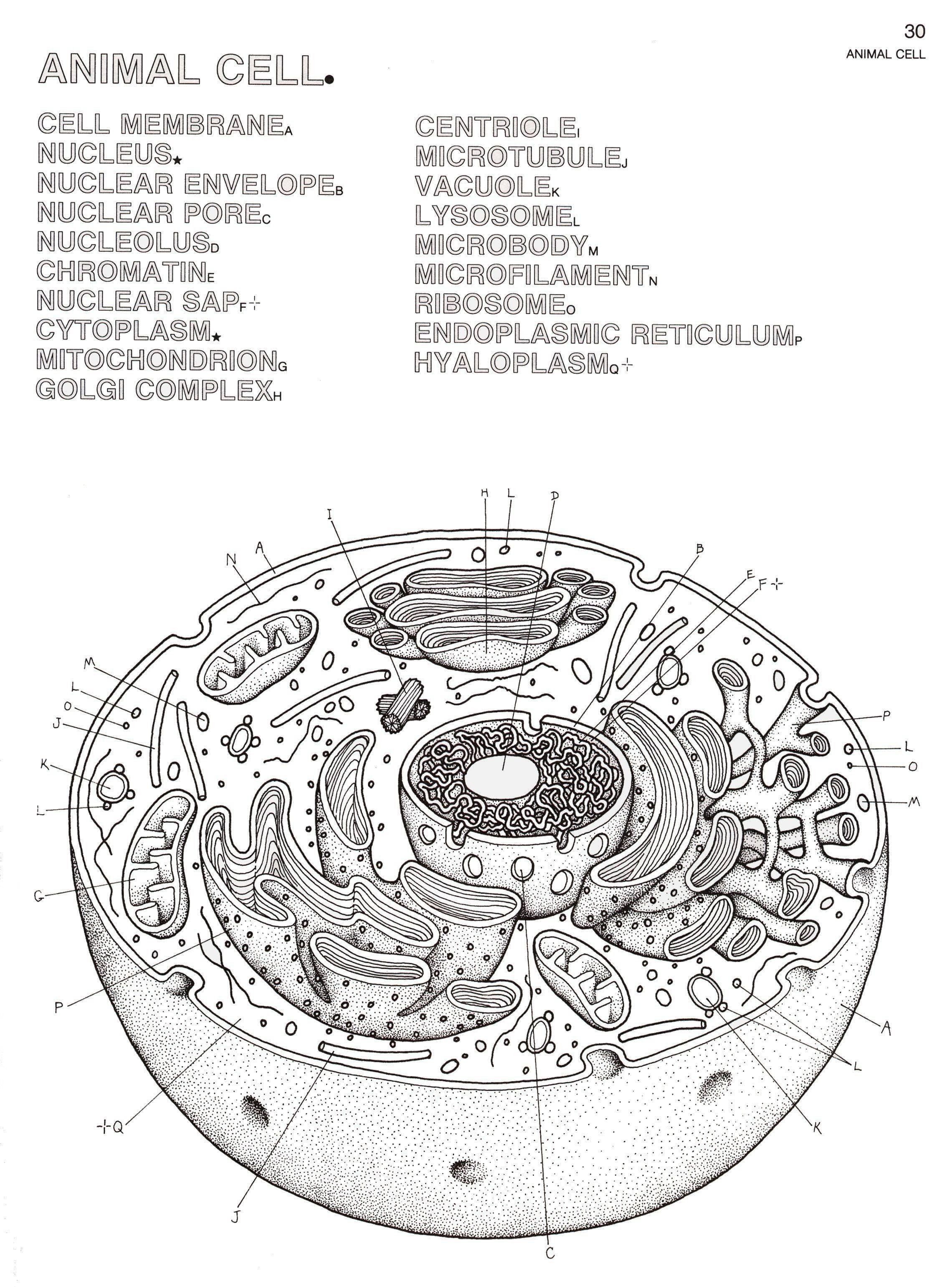 Plant Cell Coloring Key Fresh Plant Cell Coloring In