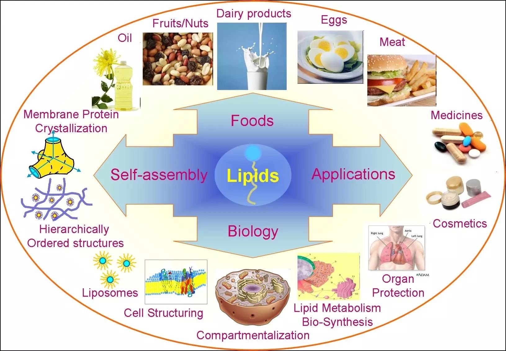 examples of lipids: many items, like dairy products and medicines
