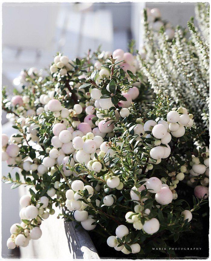Jardiniere hiver deco jardin pinterest jardini res for Jardiniere exterieur hiver
