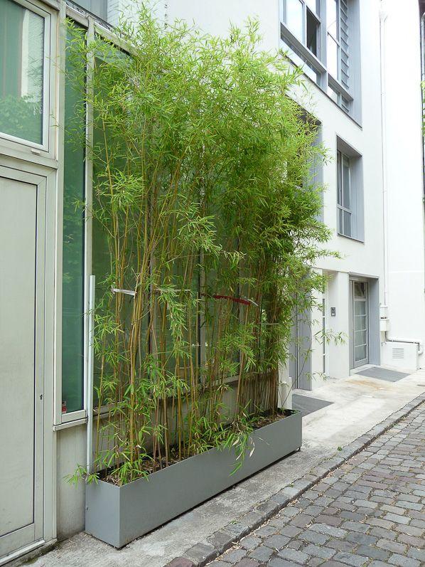 Plantation Bambou En Bac
