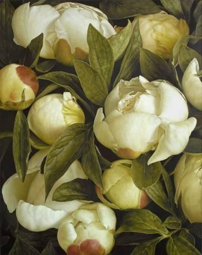 White Peonies by Mia Tarney