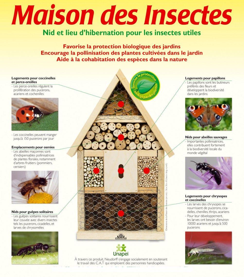Insectes des maisons ventana blog - Maison a insectes fabrication ...