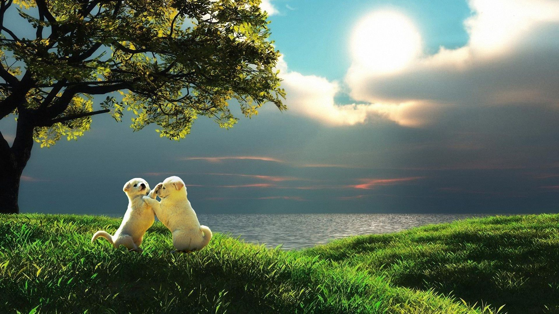 Download Wallpaper 1920x1080 Puppy Couple Sunset Nature Play