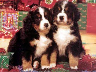 Christmas Dogs Cute Dresses 2013  Latest UK USA UAE Australia Europe Images News Update