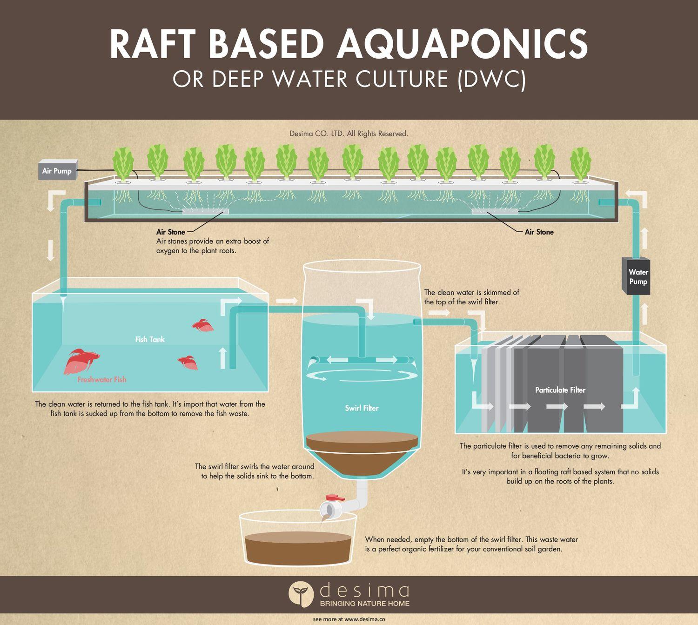 Different Types Of Aquaponic Systems Aquaponics
