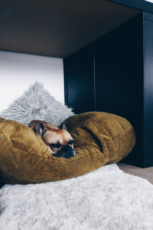 diy hundeh tte f r die wohnung selber bauen inklusive praktischem stauraum imanii the dog. Black Bedroom Furniture Sets. Home Design Ideas