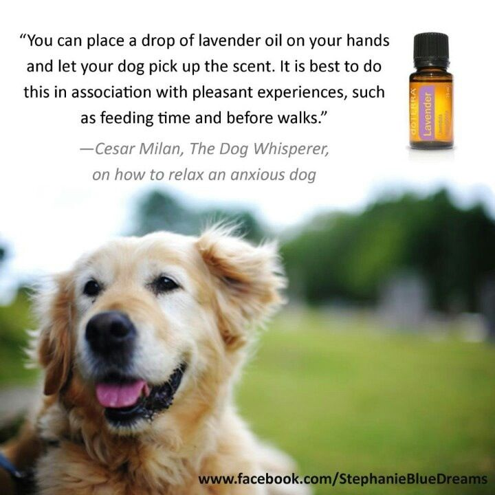 Dōterra For Your Pets Cesar Milan Order Oils And Request Samples