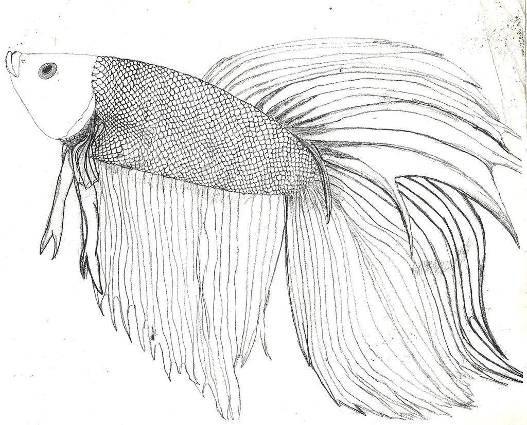beta fish art | Betta Fish :D And some info. by Zs99 | Betta Fish ...