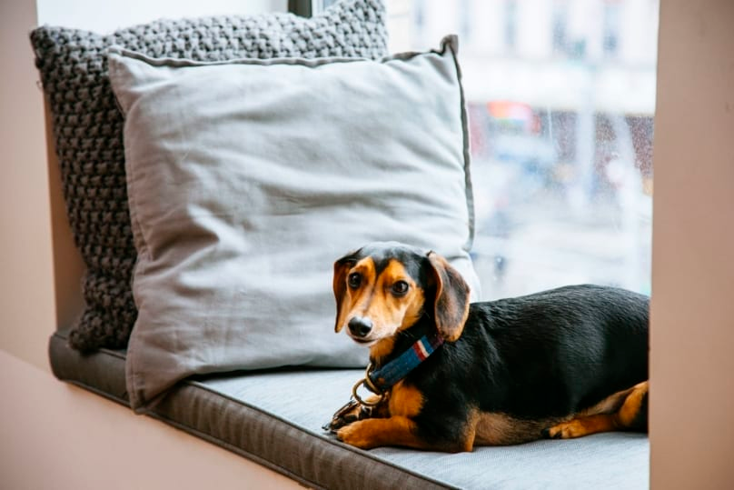 What Are Hotel Chains That Allow Dogs Pet Travel Dog Friendly Vacation Dog Friendly Stores