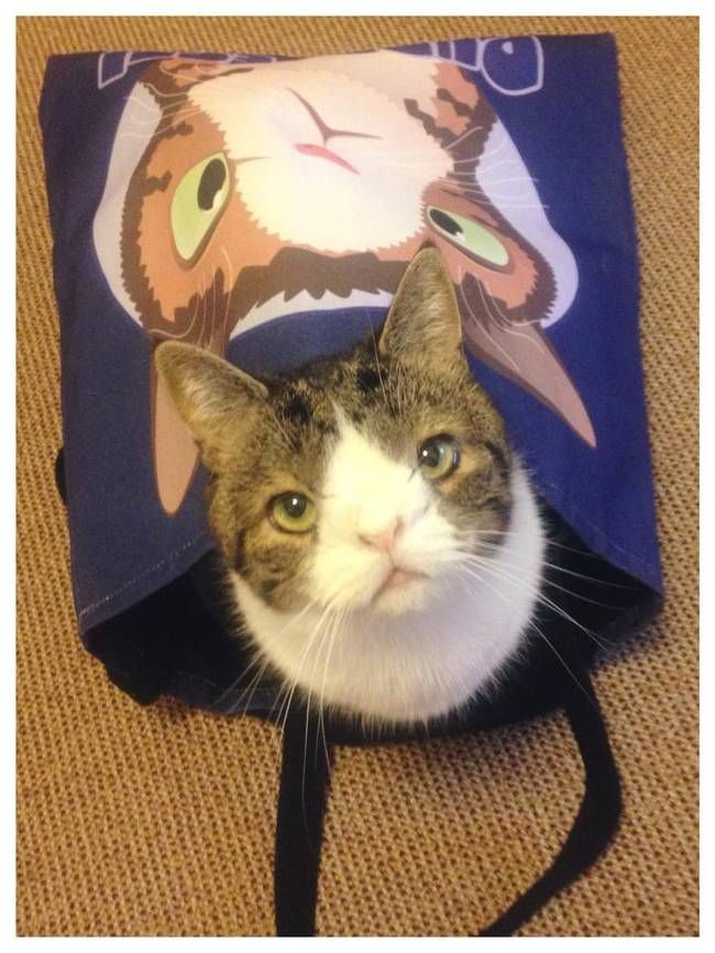 Monty the cat that nobody wanted because of his unusual face. Has his own merchandise now!