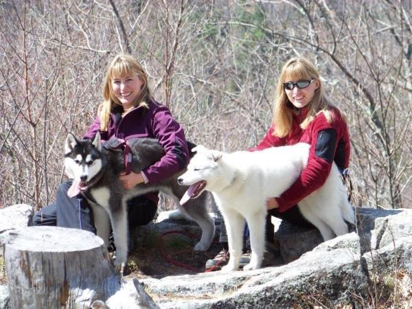 Kelim Siberian Huskies A New Hampshire Racing Kennel Siberian