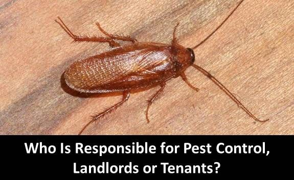 Who Is Responsible For Pest Control Landlords Or Tenants Being A Landlord Landlord Tenant Pest Control