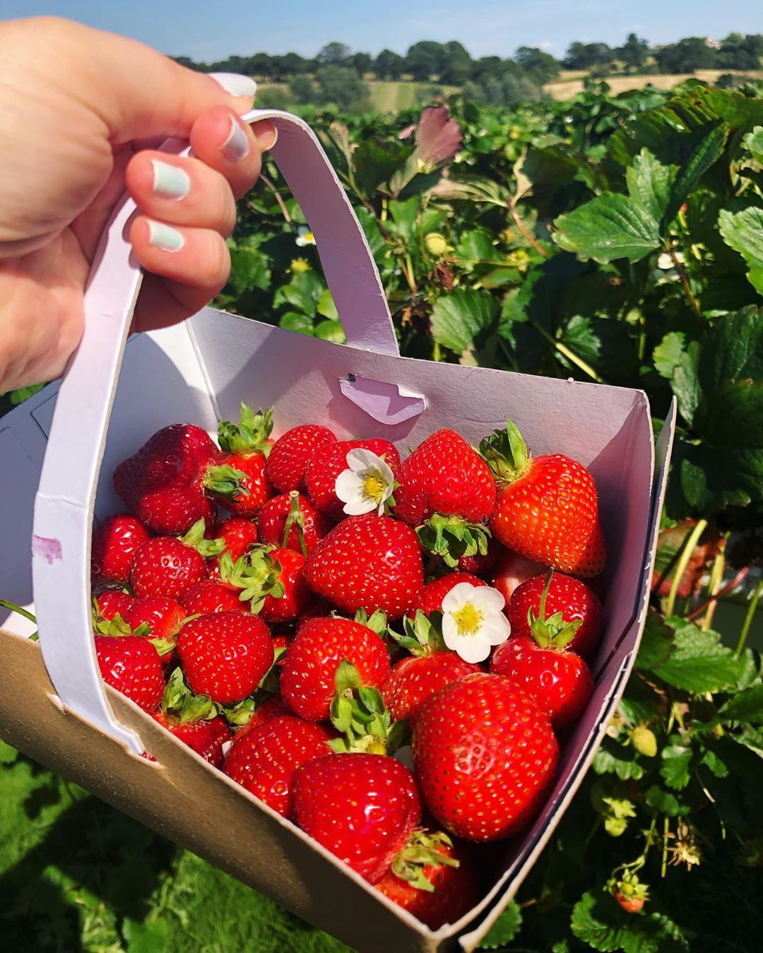 Strawberry picking season 🍓  What is everybody up to today? ☺️