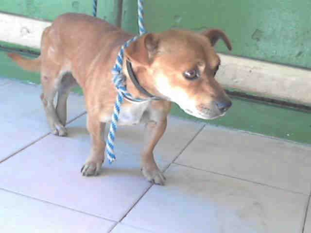 Carson Shelter Gardena California 216 Victoria Street Gardena California 310 523 9566 M Th 12pm 7pm F Su 10am 5p Dog Adoption Pets Homeless Pets