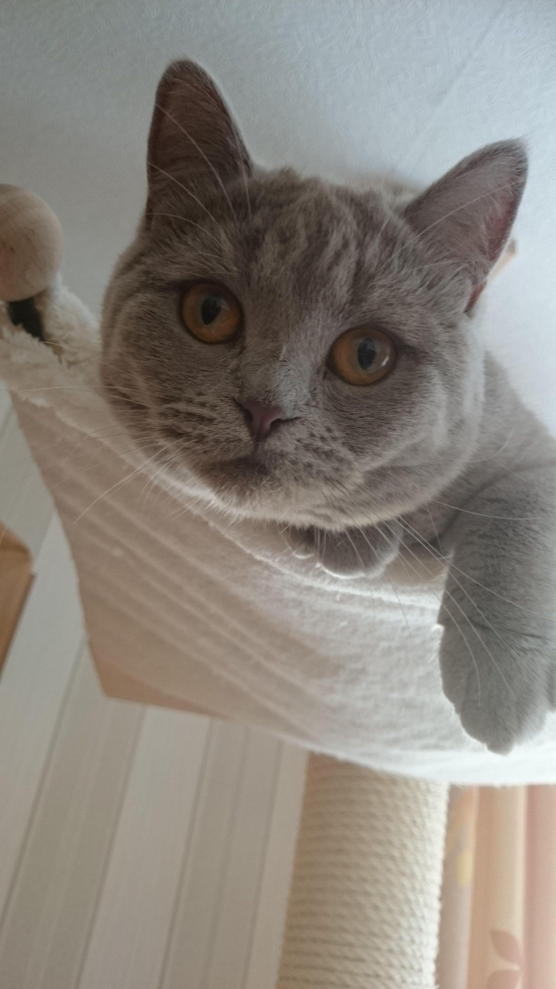 katzen richtig besch ftigen hier findet ihr tipps tierliebe pinterest katzen katzen. Black Bedroom Furniture Sets. Home Design Ideas