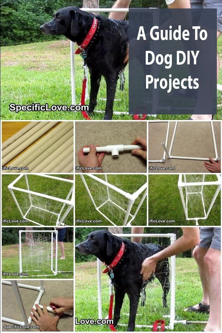 The Ultimate Guide To Dog Diy Projects Dogs Dog Wash Dog Toys