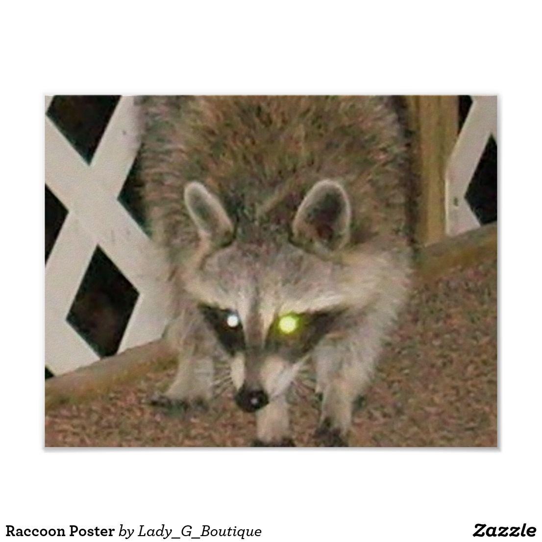 Raccoon Poster Poster prints, Raccoon, Poster
