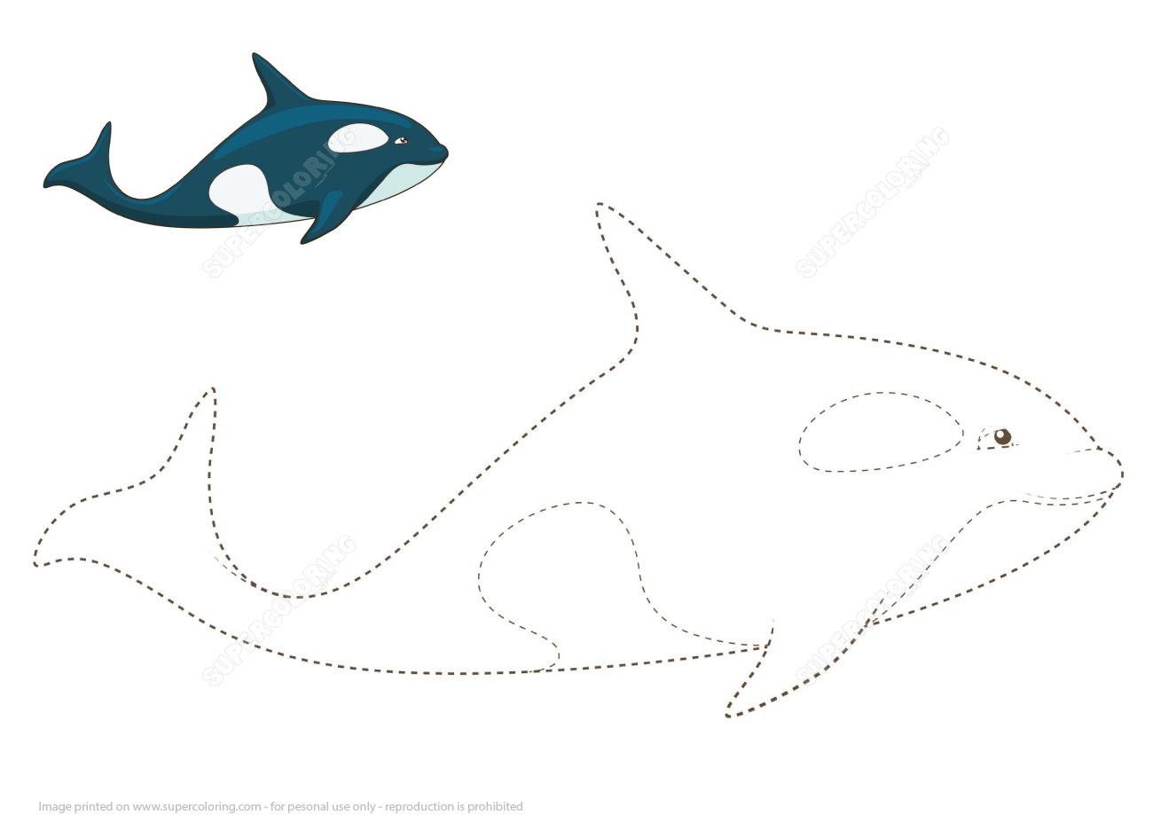 Learn To Draw A Whale By Tracing Dashed Lines And Color
