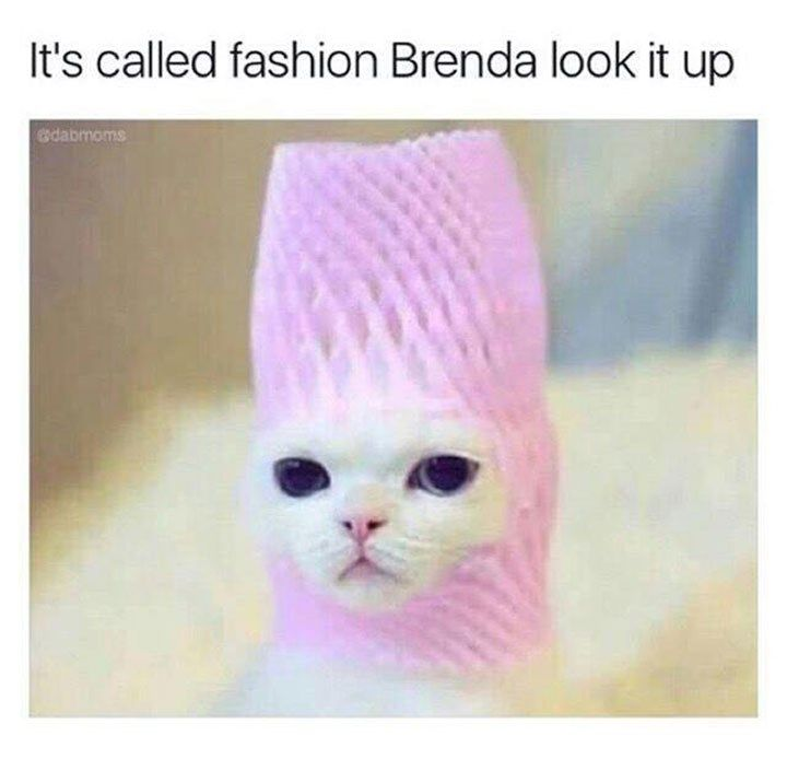 20 Cat Memes That Are The Purrfect Addition To Your Caturday Routine