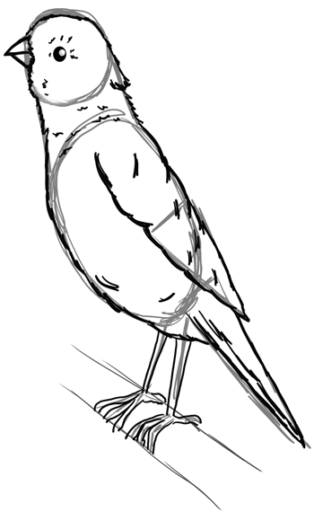 How To Draw A Canary With Step By Step Tutorial To Drawing Canaries How To Draw Step By Step Drawing Tutorials Drawings Animal Drawings Bird Drawings