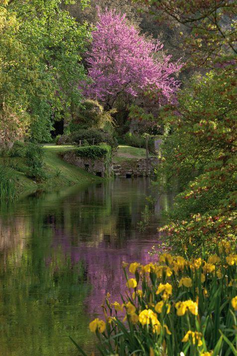 Garden of Ninfa, Italy #botanicalgardens LOVE THE TREE