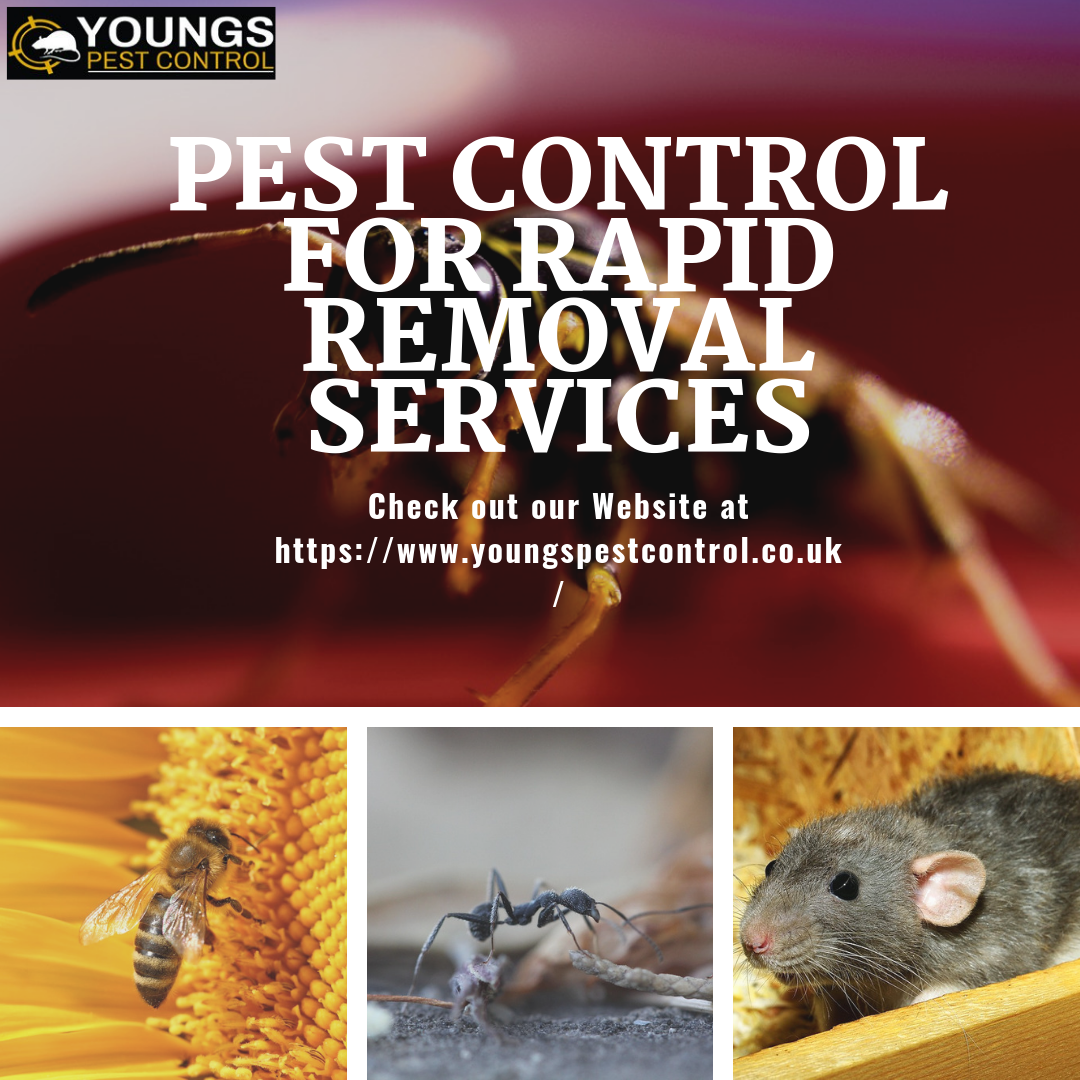 Why search for nooks & crannies to control annoying pests