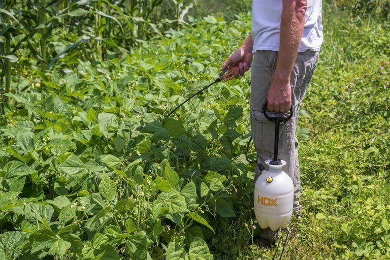 Homemade garlic hot pepper garden pest spray