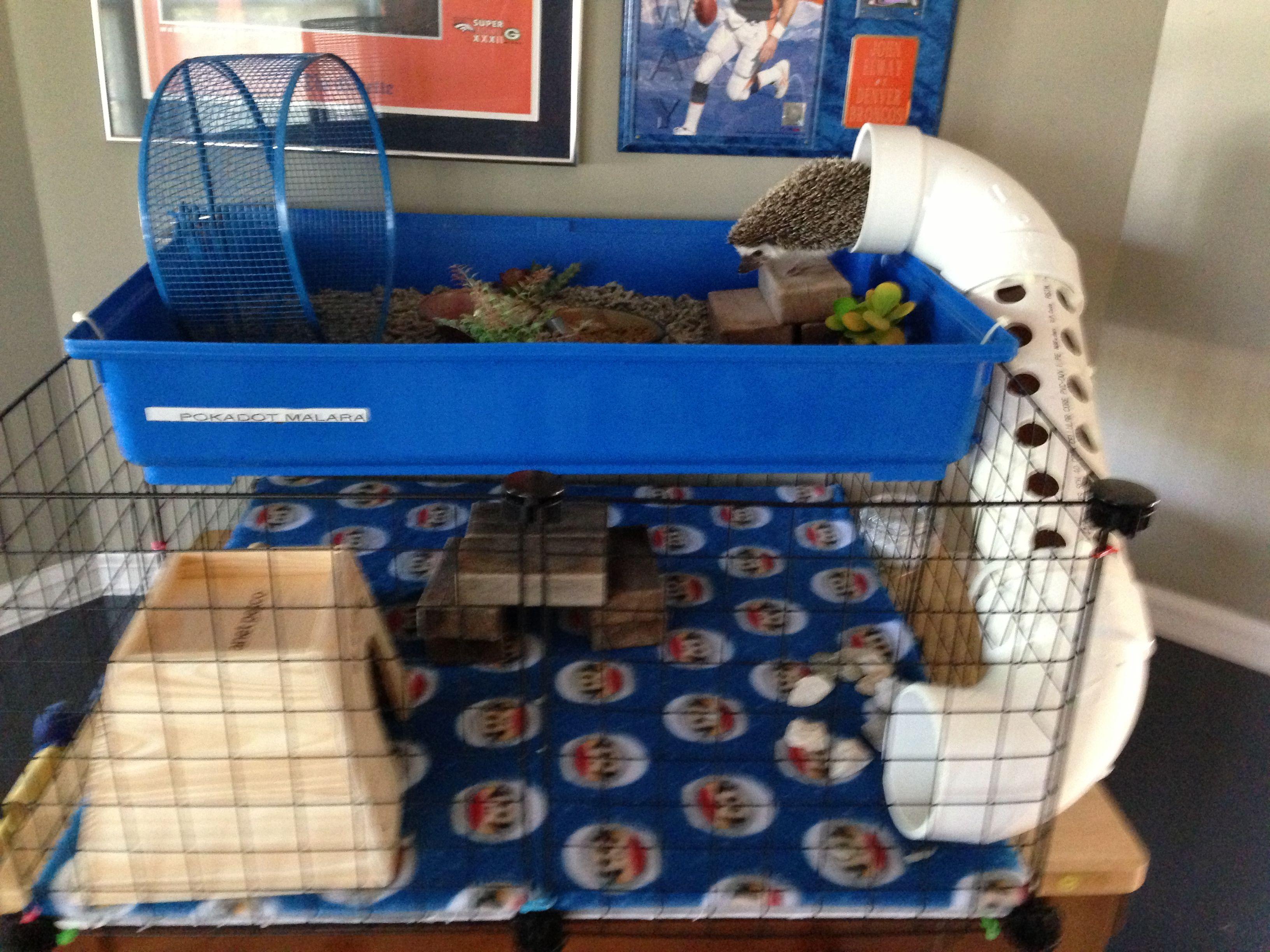 Hedgehog house 3000 spent all day on it hedgehog pet