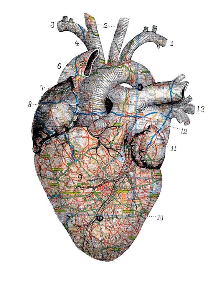 Pin de Naty Alma de Diamante en ♥cORAZÓN♥ | Pinterest | Anatomía ...