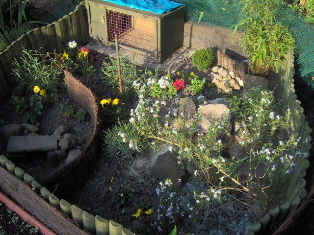 Safe Plants for Tortoises to Eat