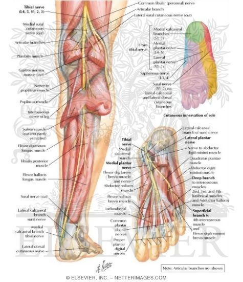 37++ Where is l4 and l5 in the spine ideas