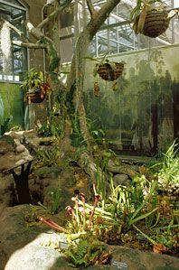a245ff15253e061198c6aa654daab52c - Meijer Gardens Butterfly House Grand Rapids
