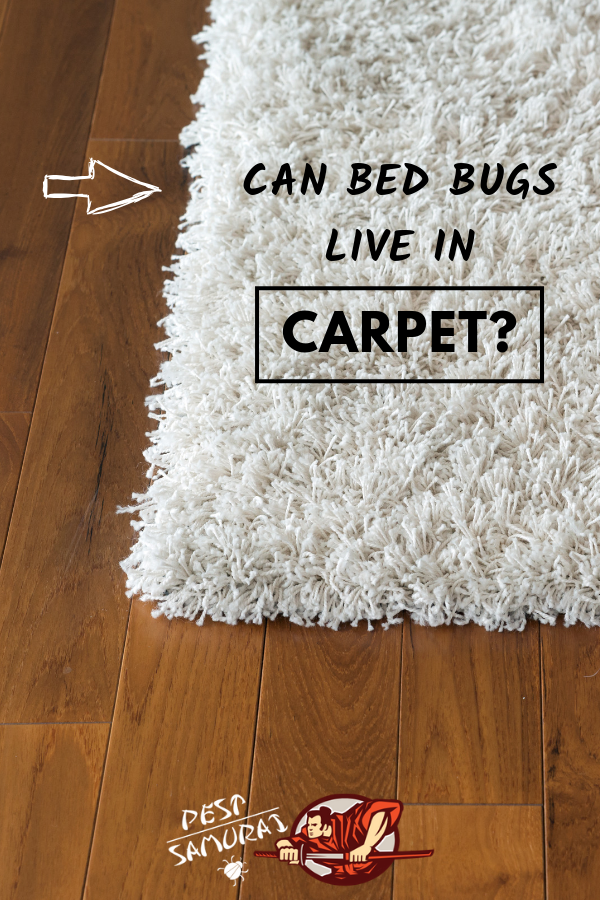 Bed Bugs in Carpet Can Bed Bugs Live in Carpet Bed bugs