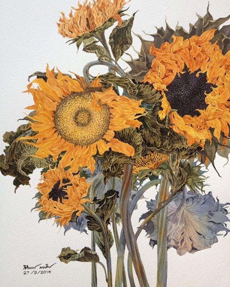 Dried sunflower #watercolorgallery #watercolorstyle #watercolorist #watercolor #waterblog #flowers #thailandwatercolor #art #artists #aquarius #aquarelle #artstudio #artgallery