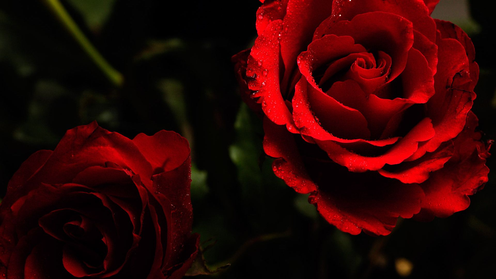 Red flower high quality wallpapers flowers pinterest red red flower high quality wallpapers izmirmasajfo