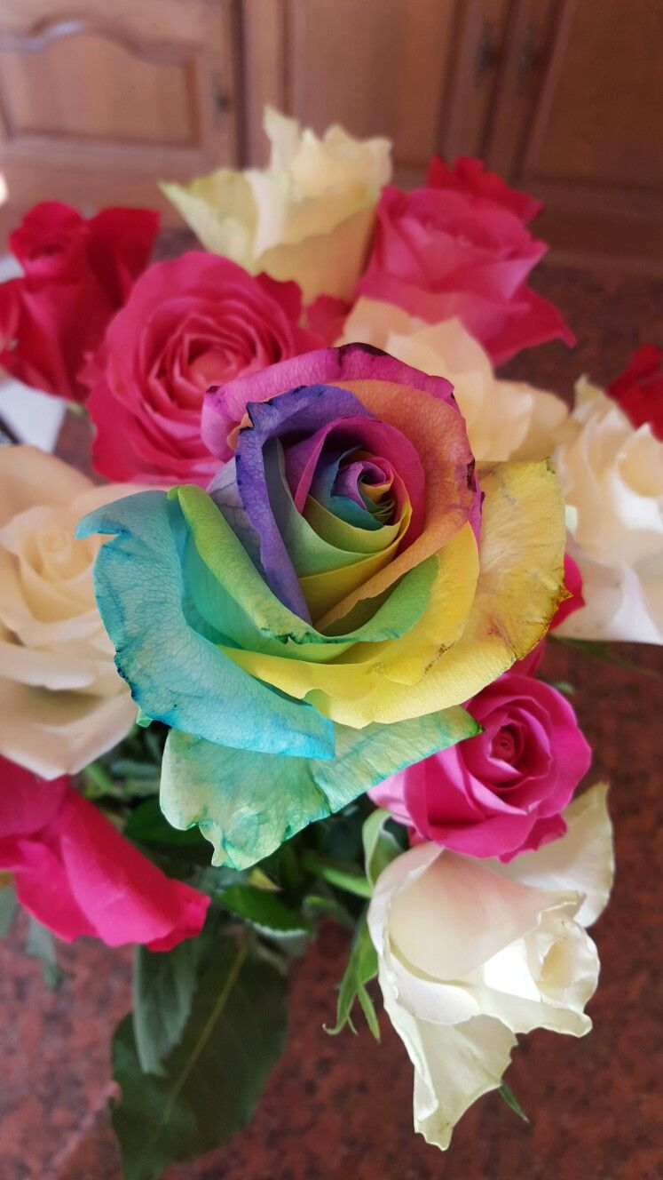 Pin by Jessie Thomas on puppy Flowers, Rose, Garden