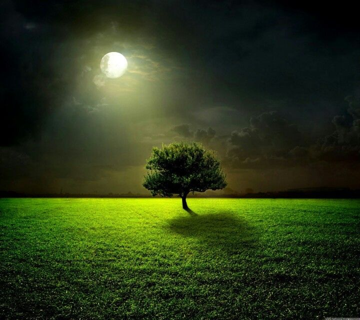 Tree In Moon Light Great Lighting Nature Beautiful Nature Nature Photography