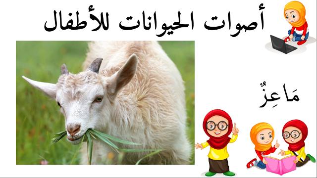 ماعز أسماء الحيوانات للأطفال وأصواتها Animals Goats